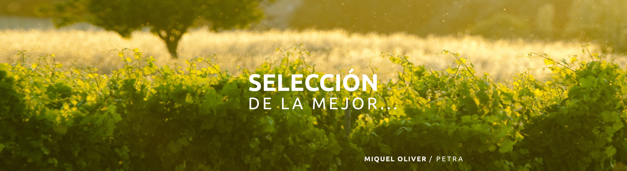 miquel1